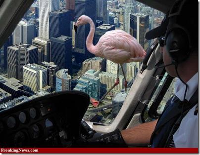 flamingogiant